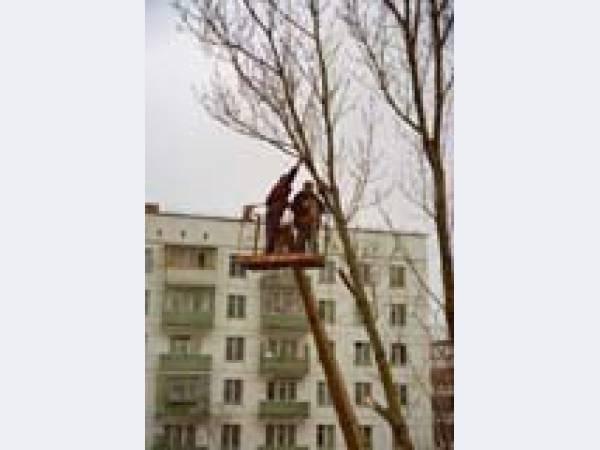 Снос, уборка, удаление, спил деревьев. Обрезание веток