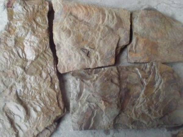 Камень пластушка песчаник Дракон от ип Шеверев А