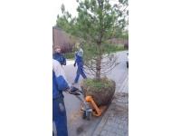 Удаление и Посадка Деревьев