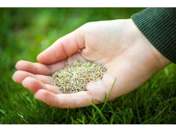 Газонные травы и травосмеси для гидропосева