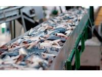 Линия для производства рыбных консервов под ключ