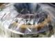 Подшипник 30-52732 ЛМ (30-32732 ЛМ) вибратора грохота ГИСТ-72К. 00. 0